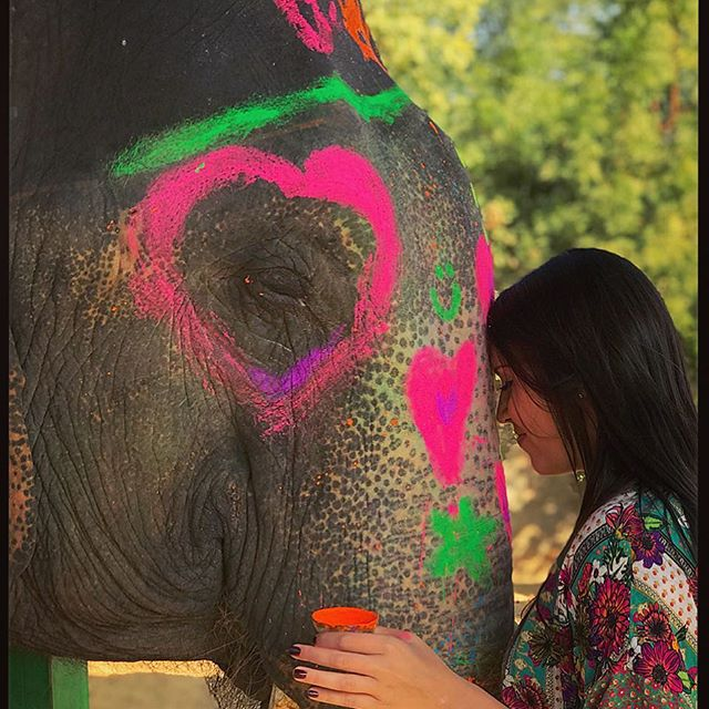 Things to do in Jaipur- Interact with elephants at Elefantastic